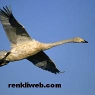 kuş resimleri 029