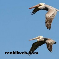 kuş resimleri 030