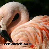 kuş resimleri 032