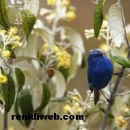kuş resimleri 038