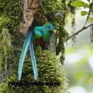 kuş resimleri 039