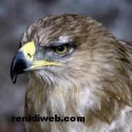 kuş resimleri 041