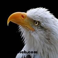 kuş resimleri 050