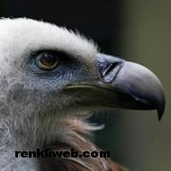kuş resimleri 051