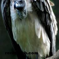kuş resimleri 052