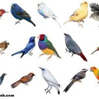 Soyu tükenen kuşlarla ilgili sloganlar nelerdir?