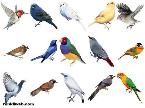 kuşlar, hayvanlar, uçmak