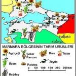 Marmara Bölgesinde Yetişen Tarım Ürünleri Neden Orada Yetişirler?