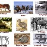 Nesli Tükenen ve Tükenmekte Olan Hayvanların Özellikleri Nelerdir?