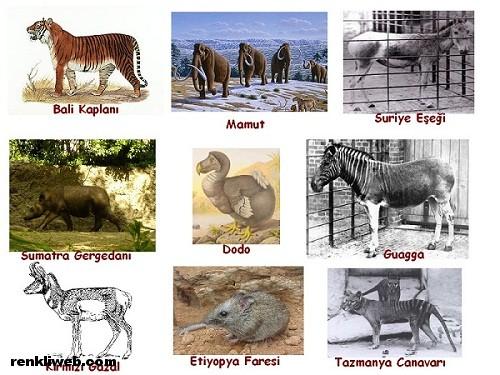 hayvanlar, canlılar, soy