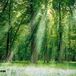 Ormancılık ve Orman Ürünleri Bölümünden Mezun Olanlar Ne İşe Yapar?