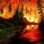 Orman Yangınlarının Çıkış Nedenleri ve Ülkemize Verdiği Zararlar Nelerdir?