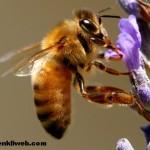 Arıcılık Bölümü Meslek Tanıtımı İş Olanakları ve Avantajları